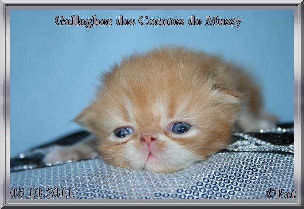 gallagher20jours