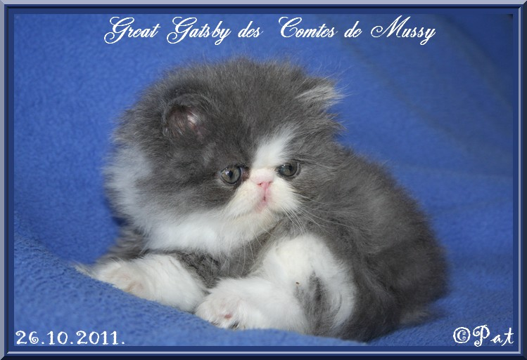 gatsby26.102.2011.2.