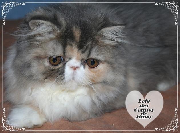 Lola2 5