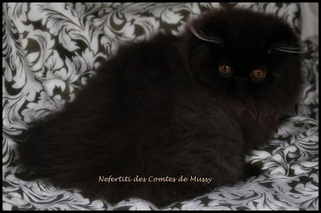 Nefertiti 7 fevrier18 1