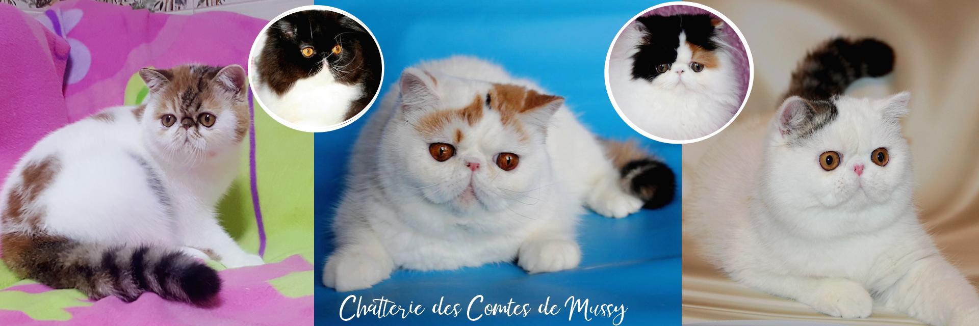 Chatterie des Comtes de Mussy